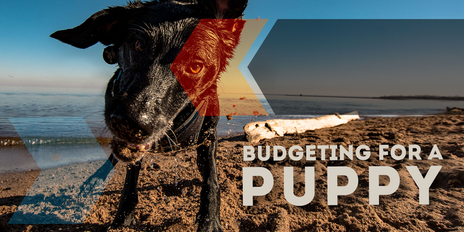 Budgeting for a Puppy